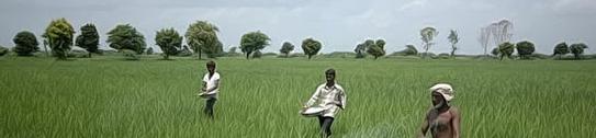 Fertilizers Projects